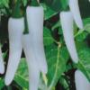 Бяла чушка