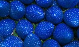 синя ягода