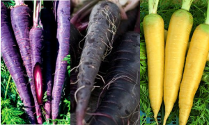 цветни моркови