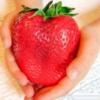 семена гигантска ягода2