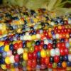 царевица дъга1